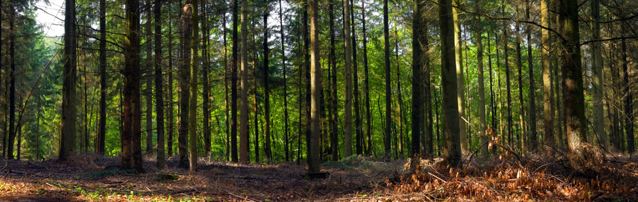 timber1